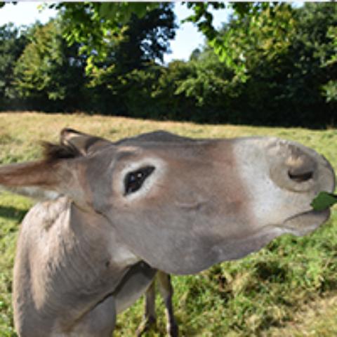 SLVIe 14 – Sortie avec les ânes